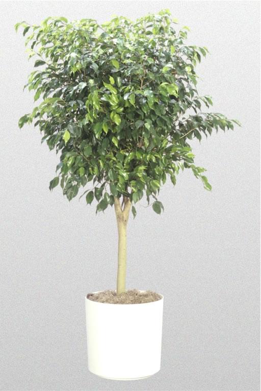 high light plants. Black Bedroom Furniture Sets. Home Design Ideas