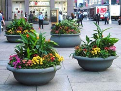 Julius Roehrs Decorative Plants For Interiors